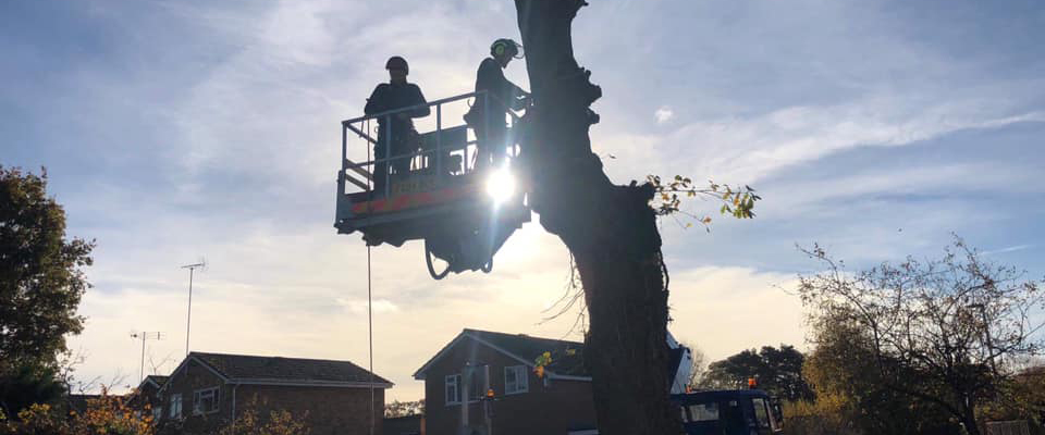 Image of Tree Surgeons